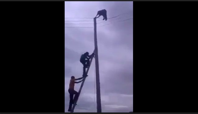 RESIDENTS PULL DOWN PHCH OFFICIAL FROM THE POLE (Watch Video)