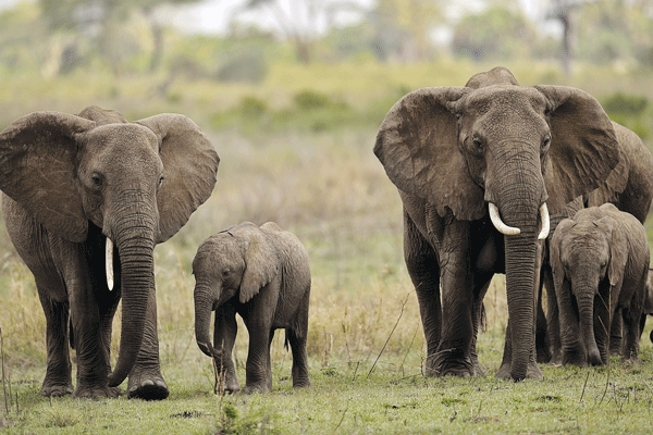 Touching: Son picks body part of father after been killed by Tamed Elephant in Victoria Falls