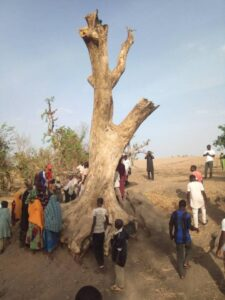 See Strange Things Discovered In a Tree That Attracted Crowd To It...you won't believe it