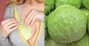 See Easy Way To Use Cabbage In Dealing With Breast Engorgement.dailyfamily.ng